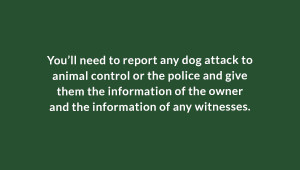 Contact the police after a dog bite